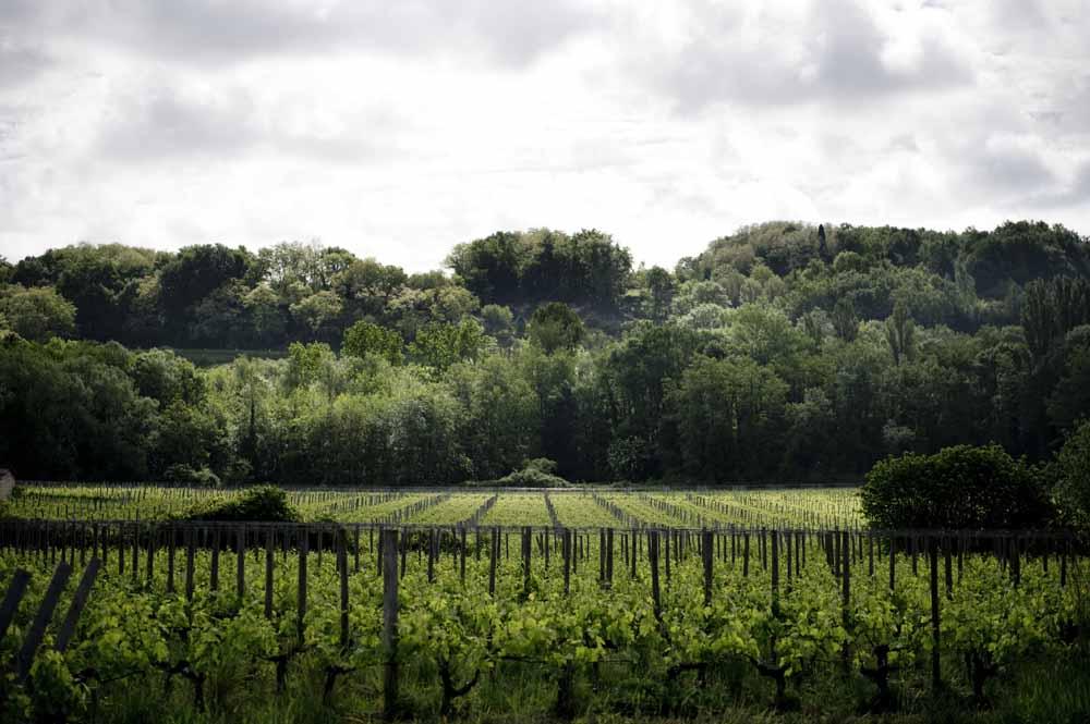Derenoncourt | Wineglobe, cuve en verre pour le vin