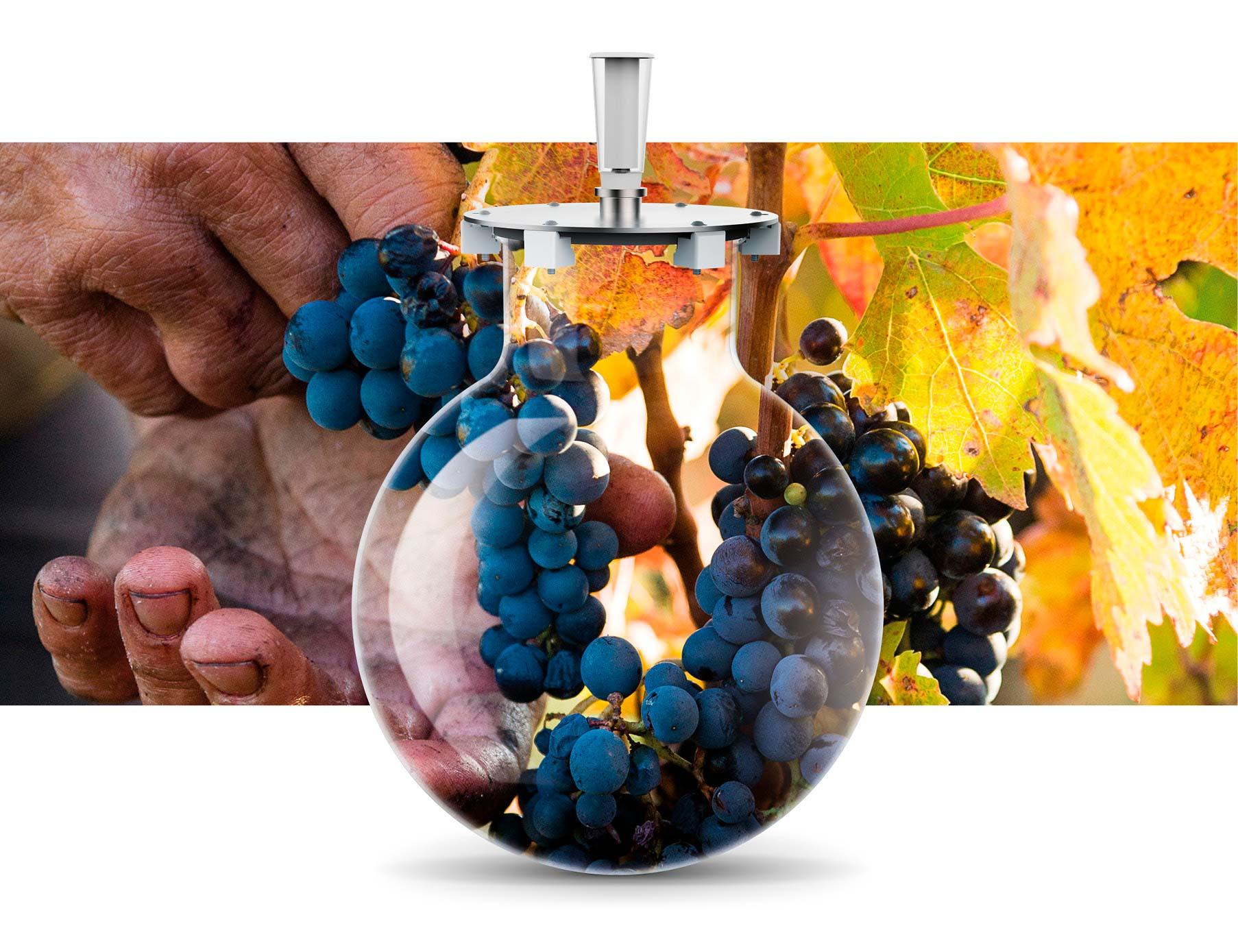 Wineglobe, la cuve en verre pour tous les vignerons